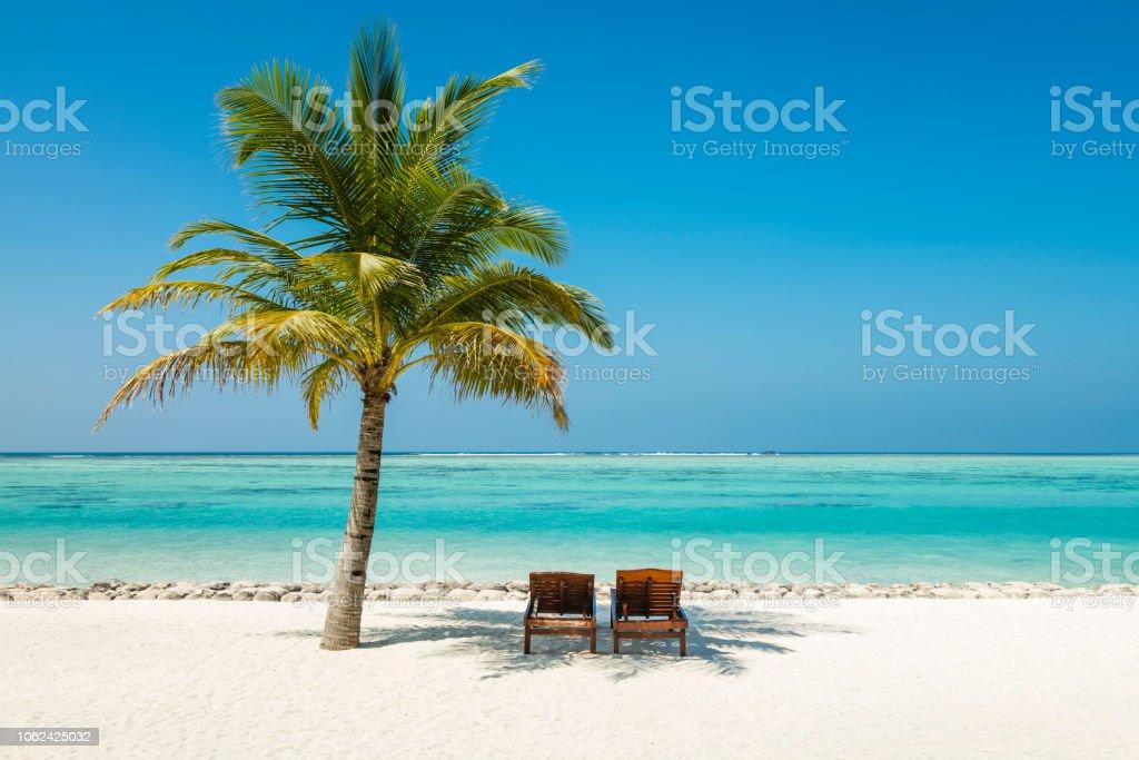 Baum im Sun Island Resort, Nalaguraidhoo, Sonnenliegen und Palm island Malediven – Foto