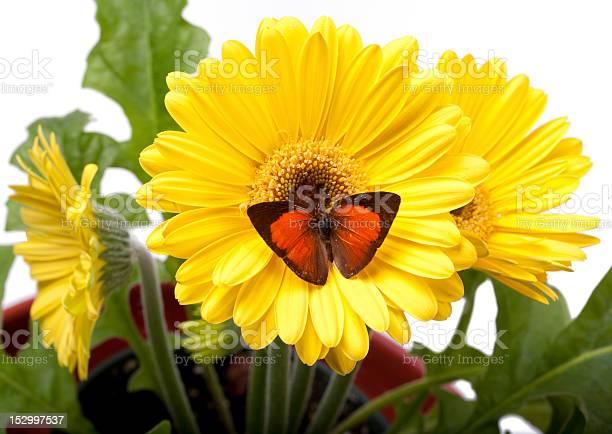 Sunbin butterfly picture id152997537?b=1&k=6&m=152997537&s=612x612&h=ohgd3ymitronofhnej3yqq4fz7thuh61i1xcaklcaoo=