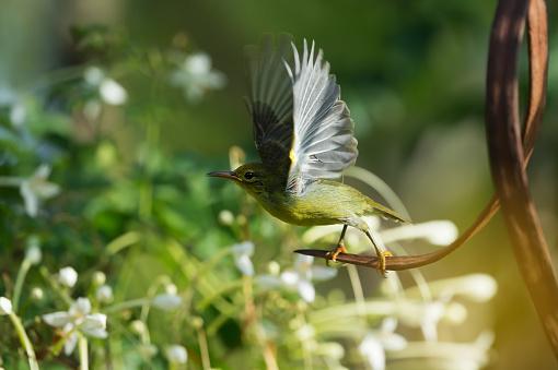 istock Sunbird taking off 960786158