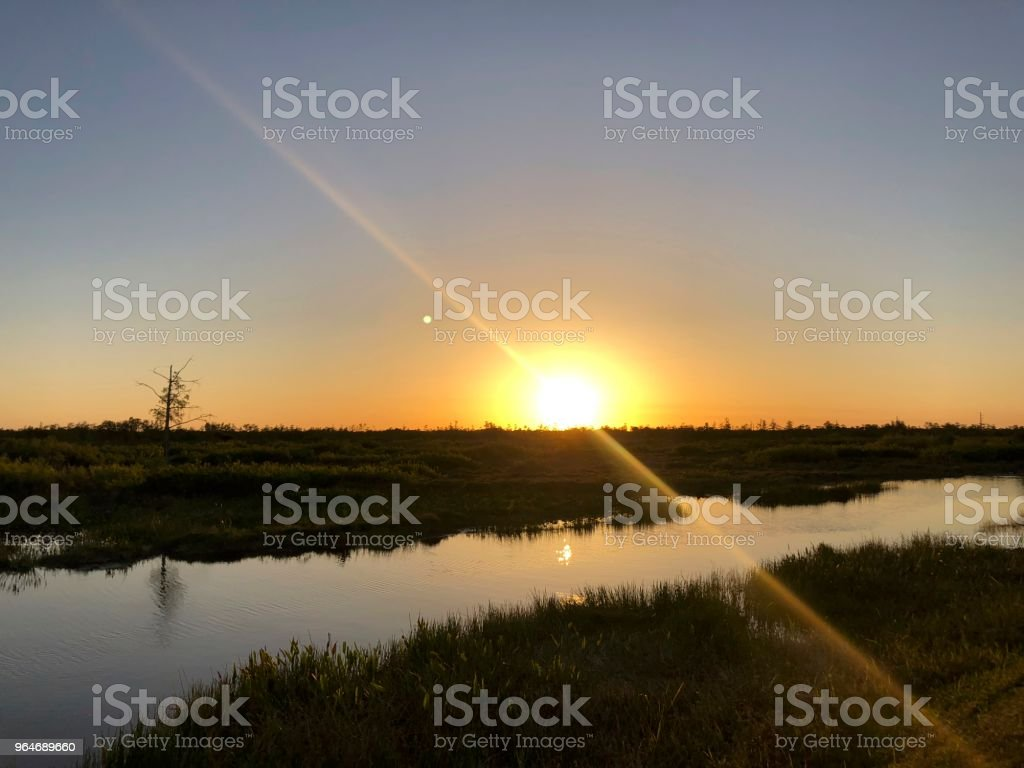 sunburst on the cypress swamp royalty-free stock photo
