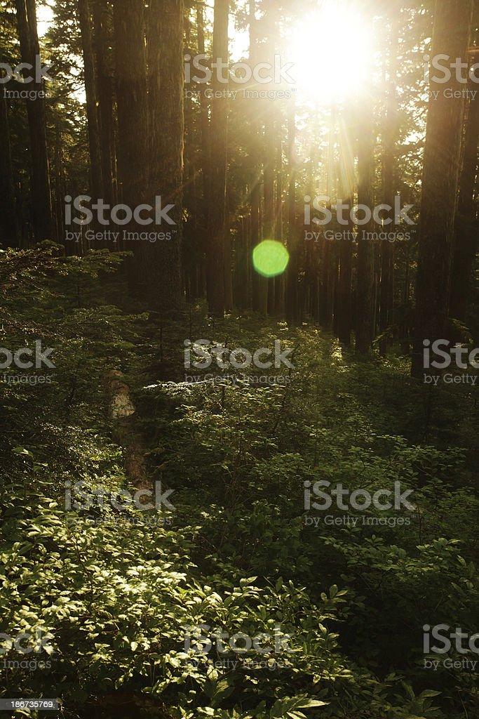 Sunburst over huckleberry glade royalty-free stock photo