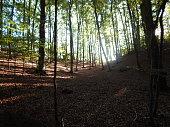 Sunday walk through the forest near Geesthacht