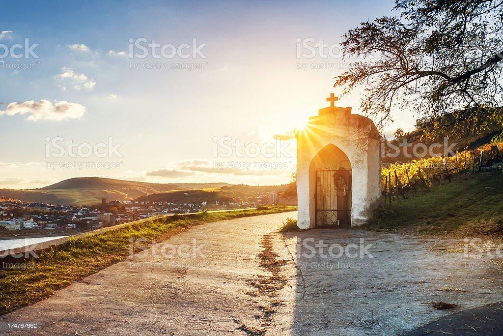 Sundown in an autumnal vineyard stock photo