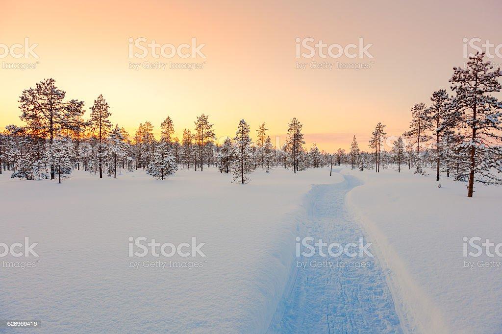Sundown in winter snowy forest, beautiful landscape foto de stock libre de derechos