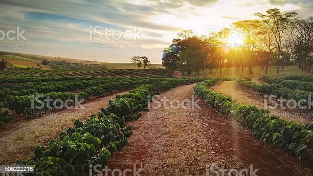 January 18, Brazil  - Sundown on the coffee plantation landscape