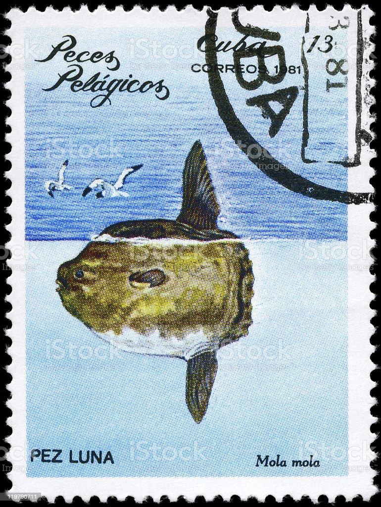 Sunfish stock photo