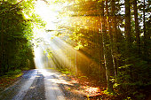 istock Sunflare on road 94502345