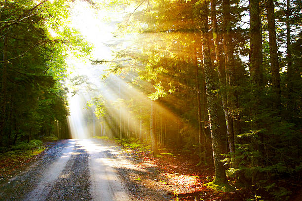 Sunflare on road stock photo