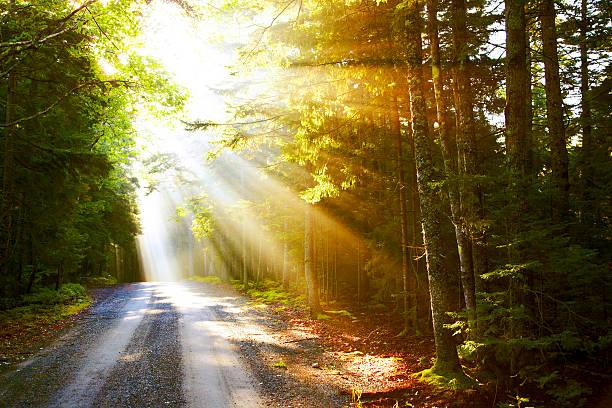 Sunflare auf road – Foto