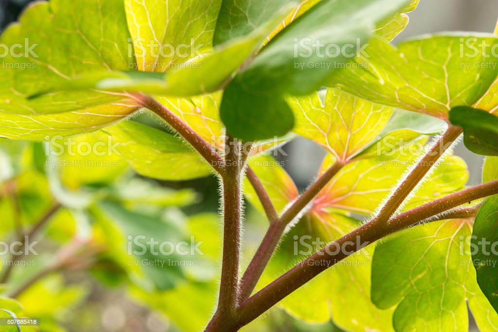 sun-flooded green leaves stock photo