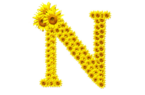 N Sunflower Alphabet Stock Photo - Download Image Now - iStock
