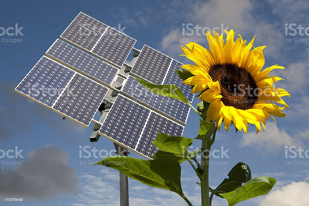 Sunflower and Solar Panel royalty-free stock photo