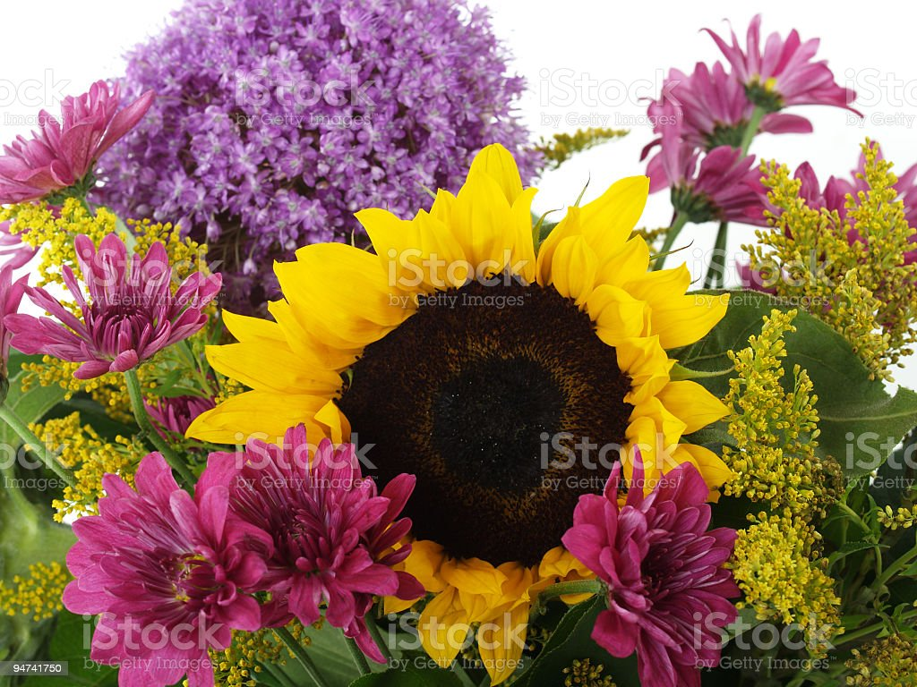 Sunflower at Center royalty-free stock photo