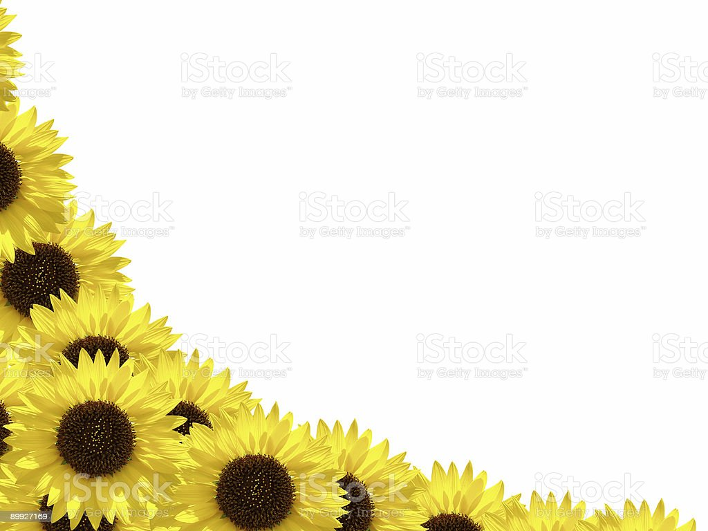 Sunflower Border Frame Stock Photo & More Pictures of Blossom | iStock