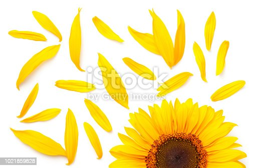 istock Sunflower Concept Isolated on White Background 1021859828