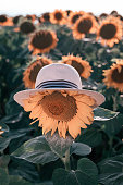 Blooming sunflowers on a brightly lit day. A sunflower wearing a hat. Traveling concept.
