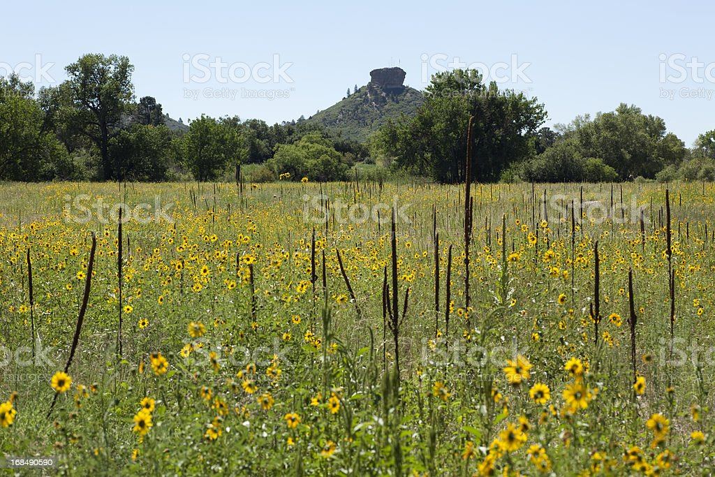 Sunflower field and Castle Rock Colorado stock photo