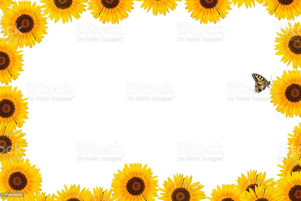 Sunflower frame border with butterfly xxxl stock photo for Decoraciones para hojas