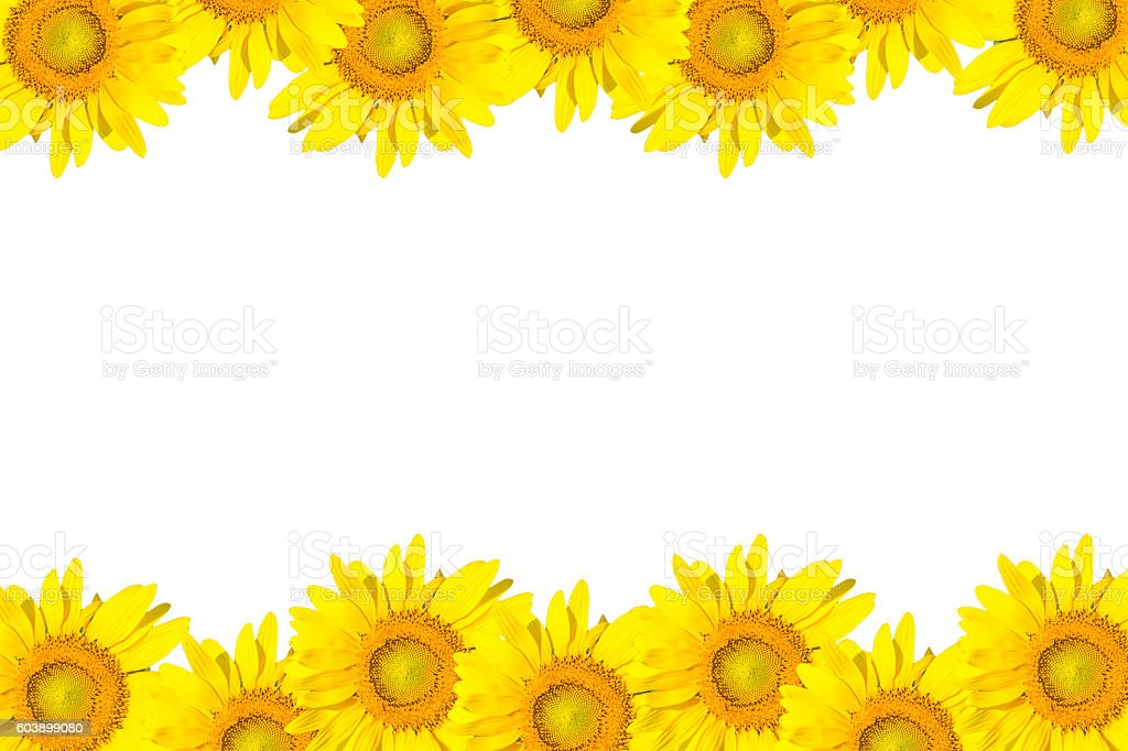 Sunflower Frame Isolated On White Stock Photo & More Pictures of ...