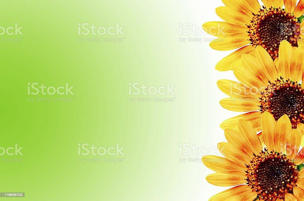 Sunflower frame royalty-free stock photo