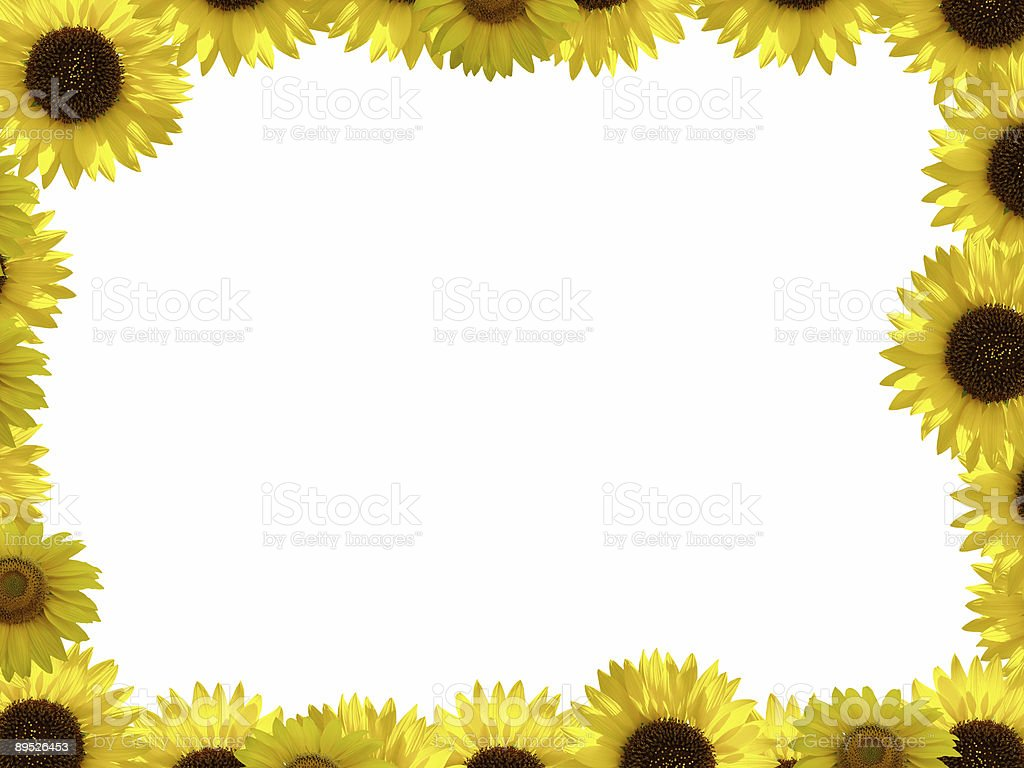 Sunflower frame XXL royalty-free stock photo