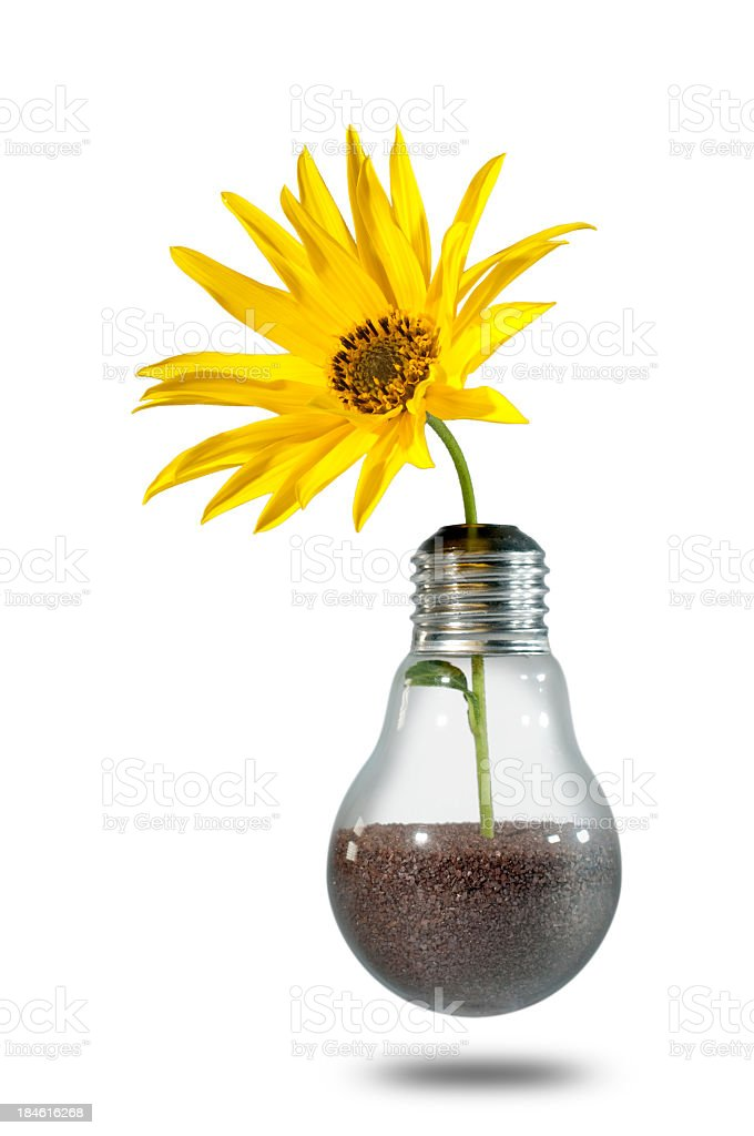 Sunflower growing out of lightbulb filled with soil royalty-free stock photo