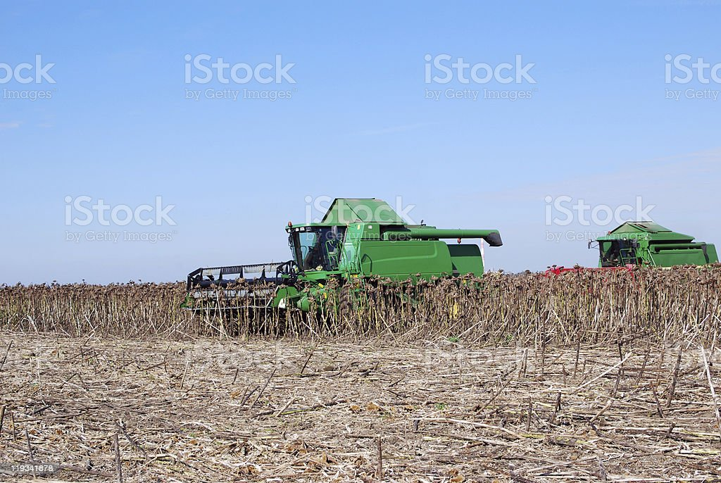 sunflower harvest with combine royalty-free stock photo