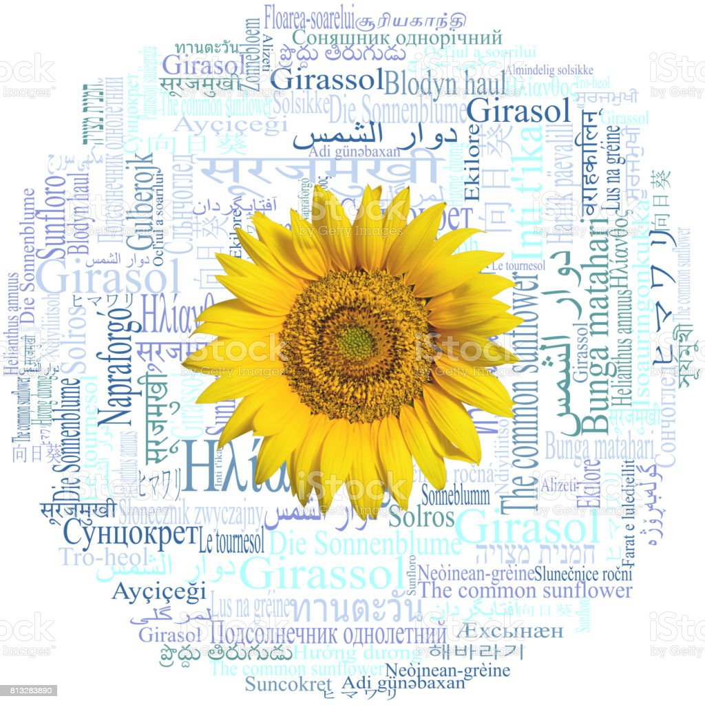Sunflower head. Sunflower written in fifty-nine different languages.  Word cloud. stock photo