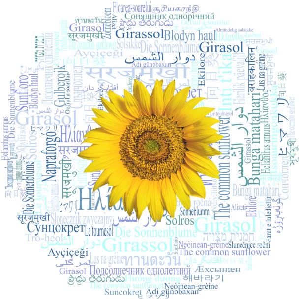 sonnenblume kopf. sonnenblume in 59 verschiedenen sprachen geschrieben.  schlagwortwolke. - kurdische sprache stock-fotos und bilder