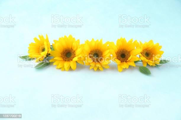 Sunflower headerfooter picture id1237700219?b=1&k=6&m=1237700219&s=612x612&h=n6hhqna 5bfixto5sgmu5wijkrzf6llyazhqm7e9fkk=