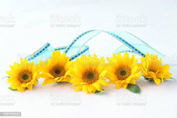 Sunflower headerfooter picture id1237707257?b=1&k=6&m=1237707257&s=612x612&h=d9kv8jppa2ak8t8gxdhgxi6qvbh4kzidrl249 bpkzo=