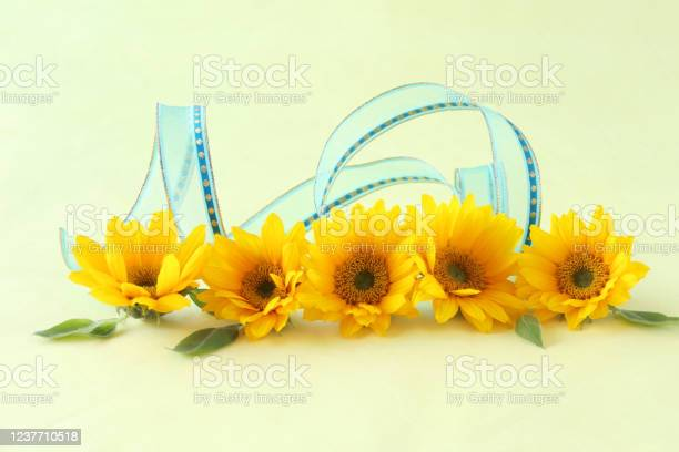 Sunflower headerfooter picture id1237710518?b=1&k=6&m=1237710518&s=612x612&h=popepwlldosnwzckemvqye1vo99gmxu02l13rl 25di=