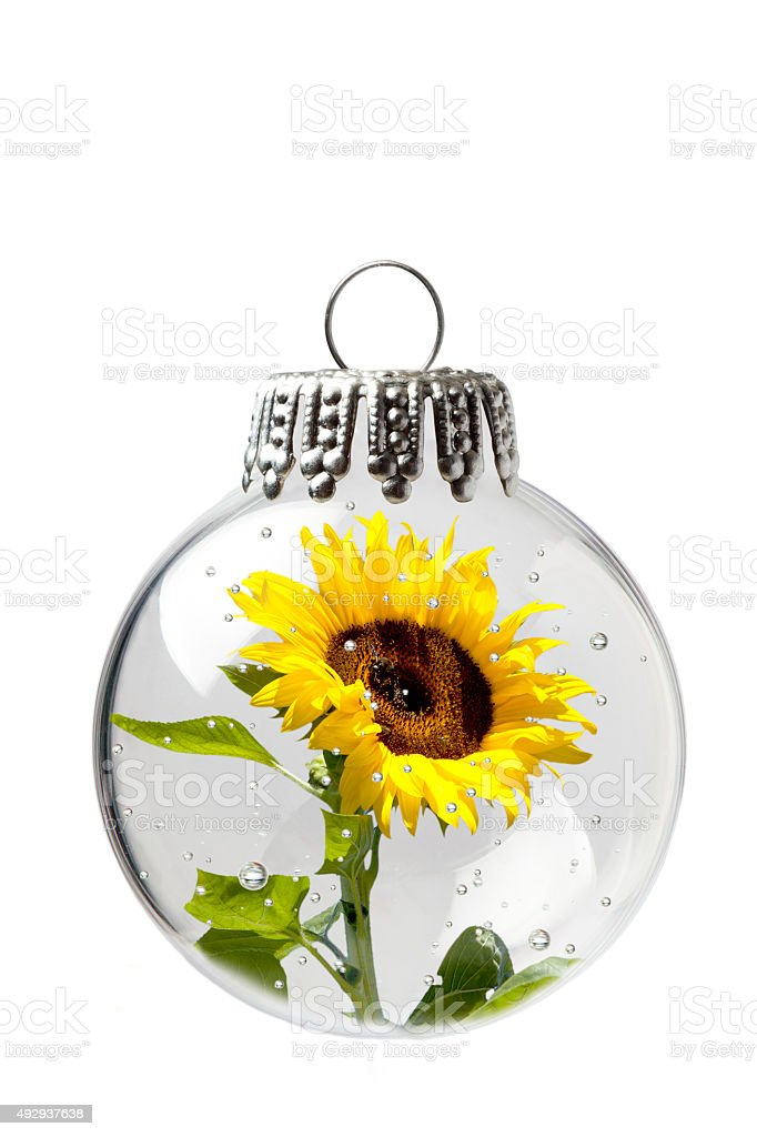 Sunflower In a Christmas Ornament stock photo