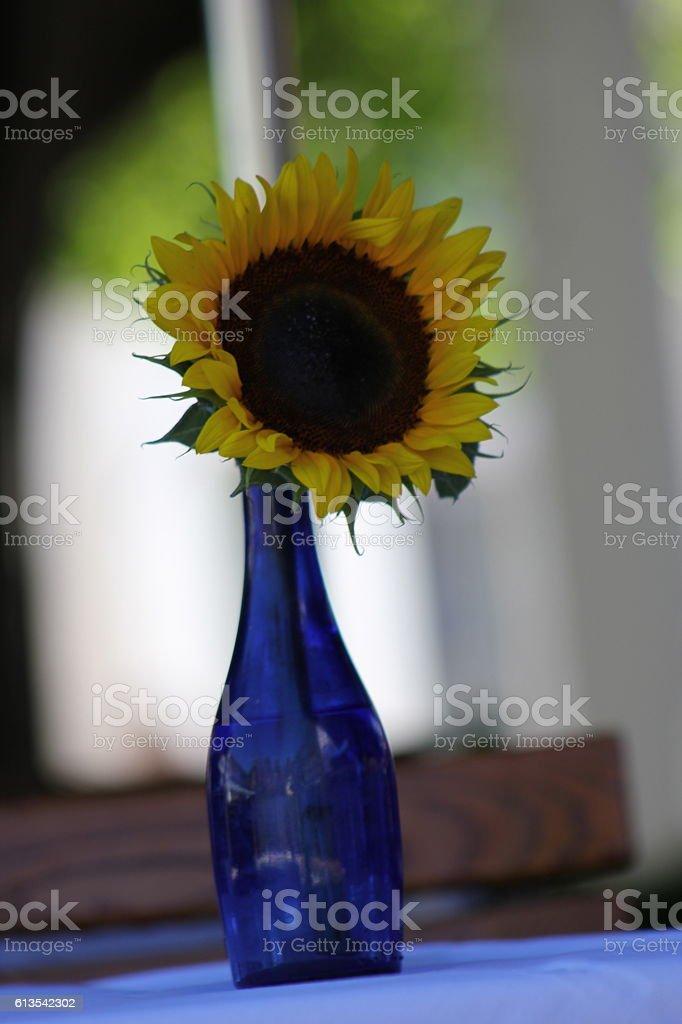 Sunflower in vase stock photo