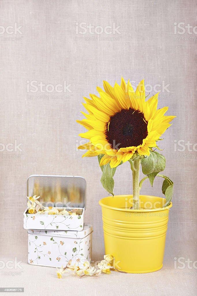 Подсолнух в Желтый закрытый на льняном фоне стоковое фото