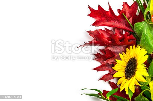 Sunflower isolated on white. Autumn Flowers with leaves. Happy birthday concept