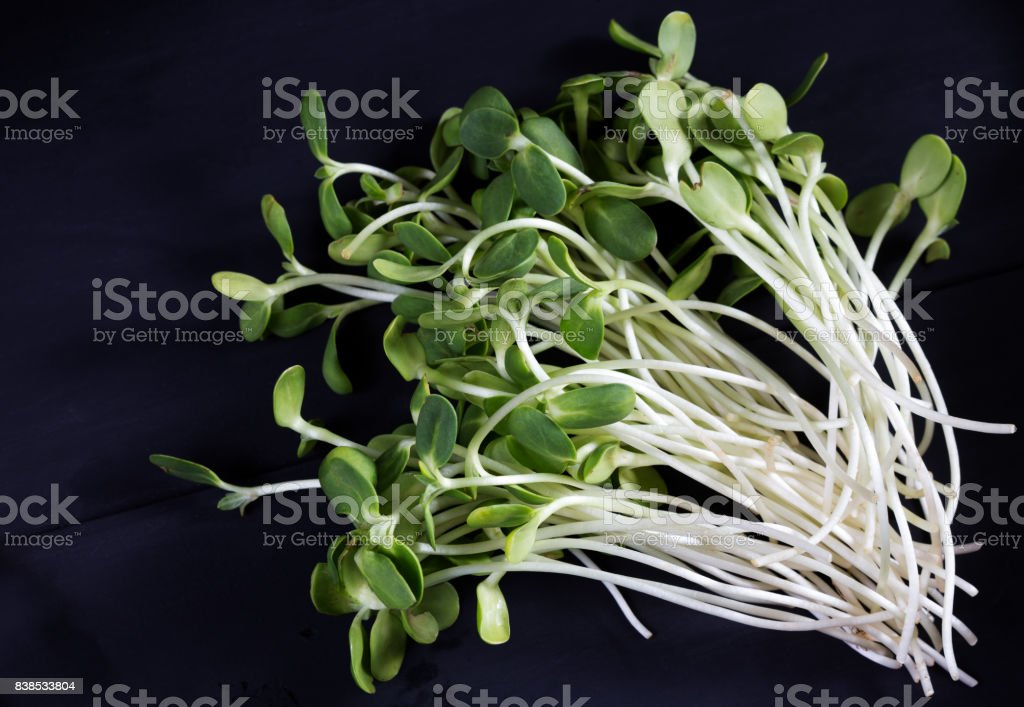 sunflower microgreen on the black background stock photo