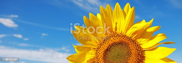 A DSLR close-up photo of a beautiful sunflower. Blue sky background with light clouds. Space for copy