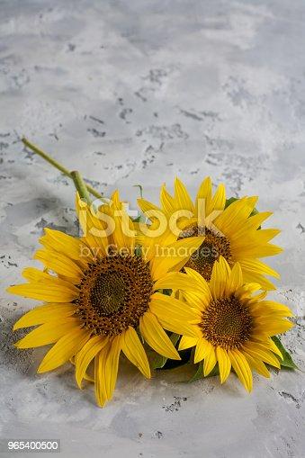 Sunflower On Background - Stockowe zdjęcia i więcej obrazów Abstrakcja