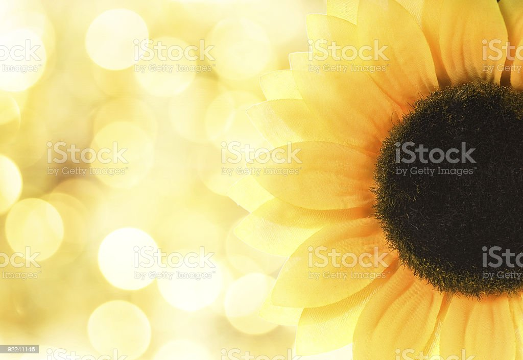 Sunflower over abstract background stock photo