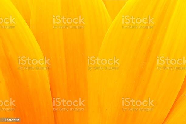 Photo of Sunflower petals