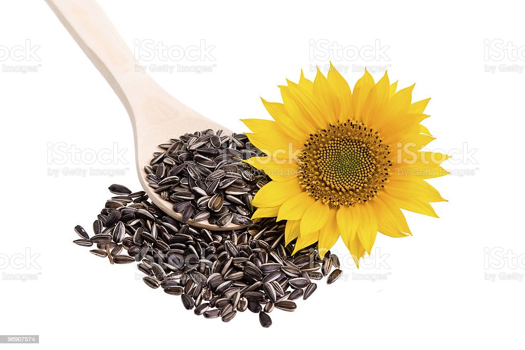 Sunflower seed on a wooden spoon with flower royalty-free stock photo