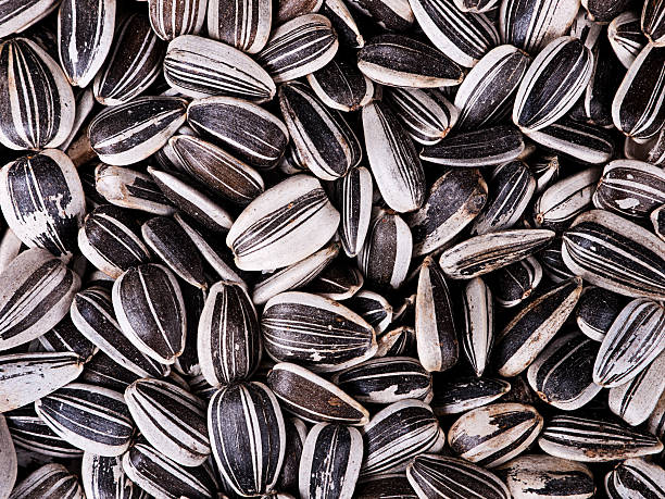Sunflower seeds macro background stock photo
