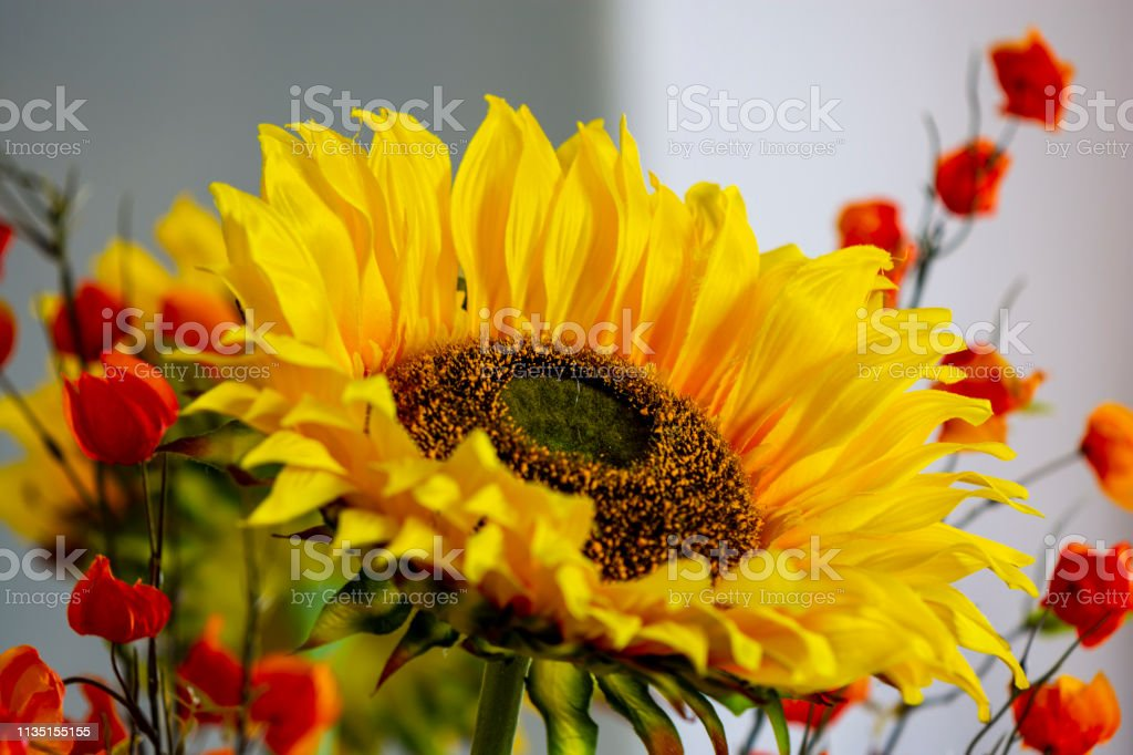 Sunflower up close stock photo