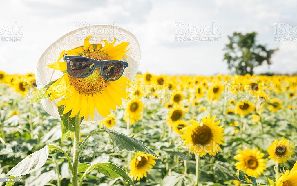 sunflower wear sunglasses stock photo
