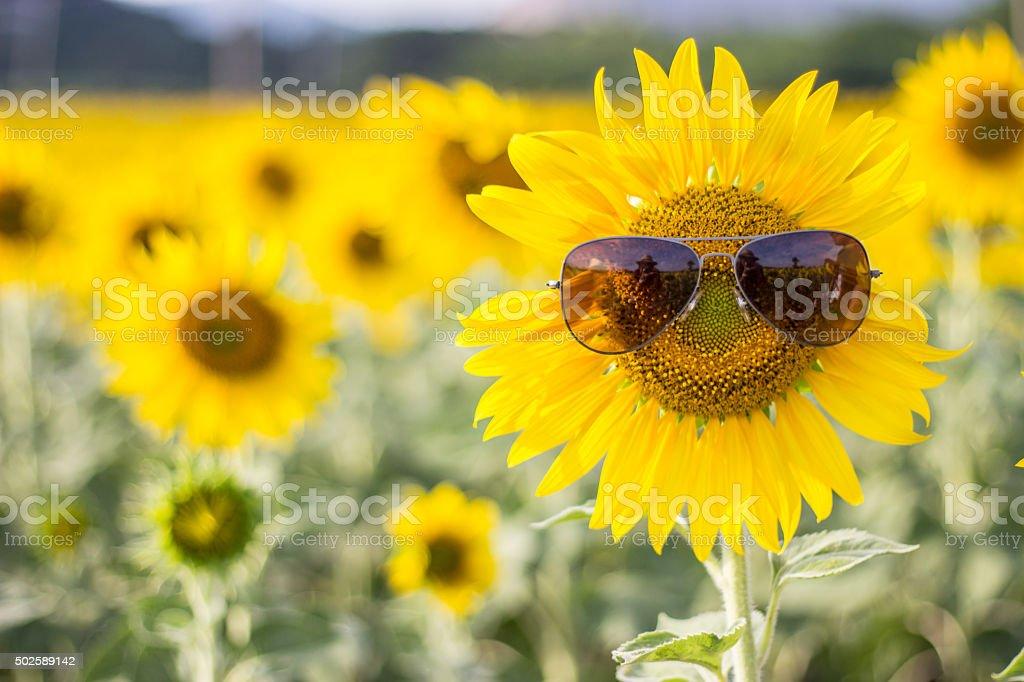 Sunflower wearing sunglasses in soft focus stock photo