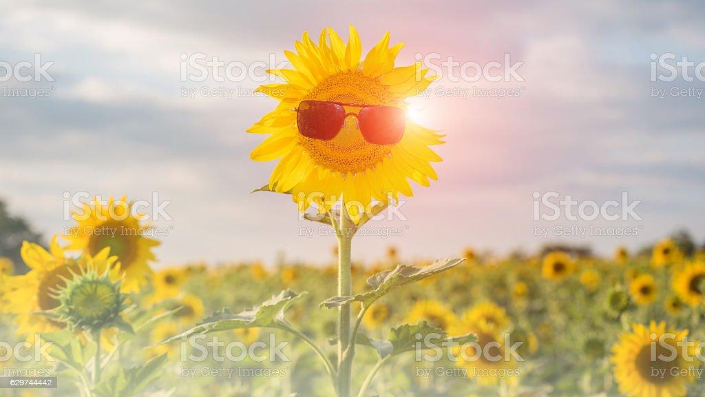 Sunflower wearing sunglasses stock photo