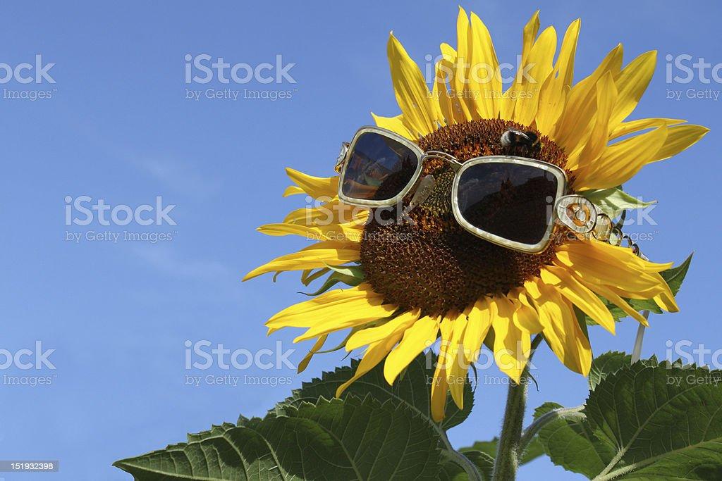 Sunflower with eyeglasses against blue sky stock photo