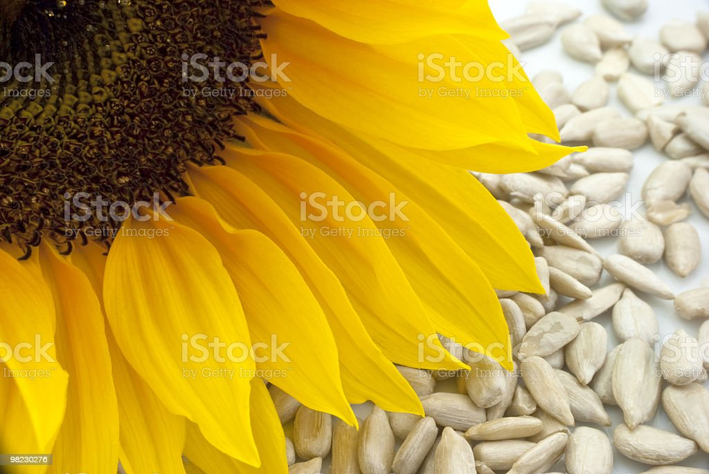 Sunflower with Seeds - Closeup royalty-free stock photo