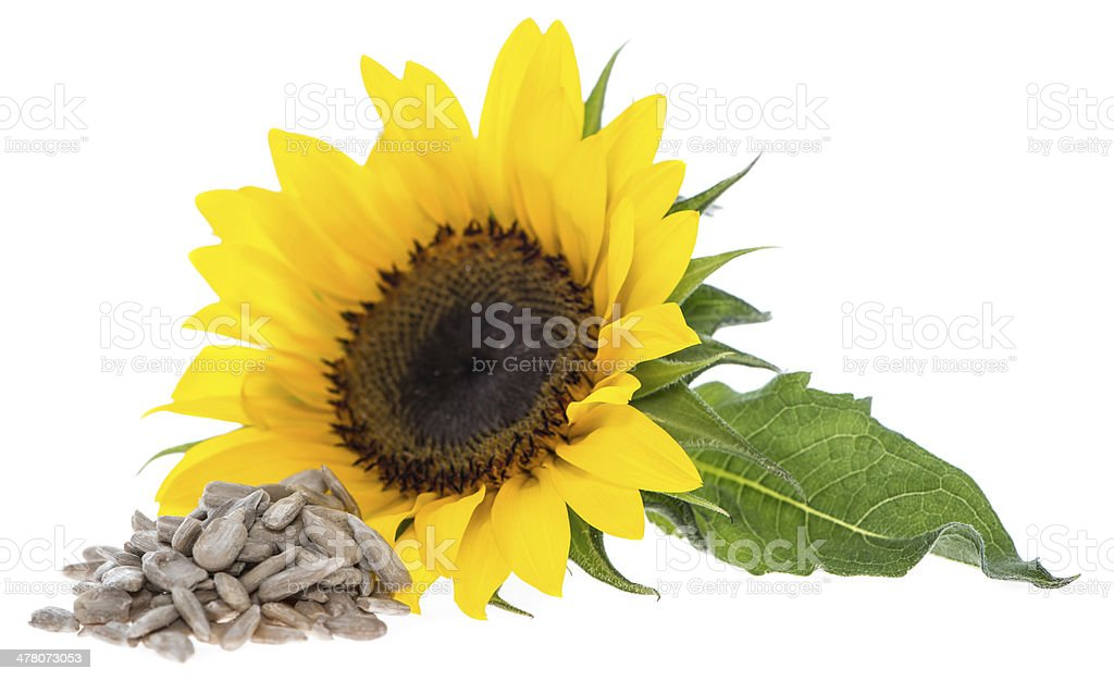 Sunflower with Seeds on white stock photo